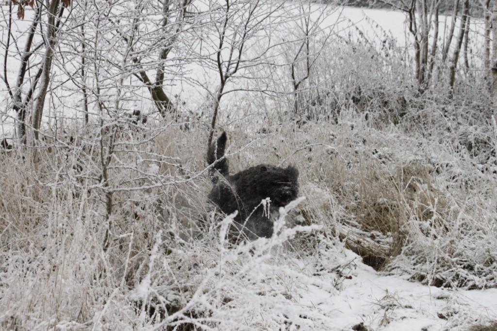 winter-2010-020-1024x768
