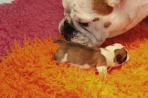 pups pink en dundee 035 [800x600]